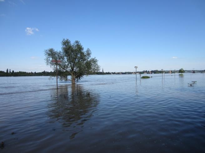 Mainz Hochwasser 4